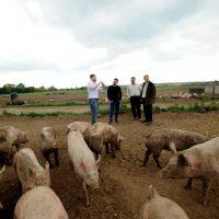 !meet the farmer pigs